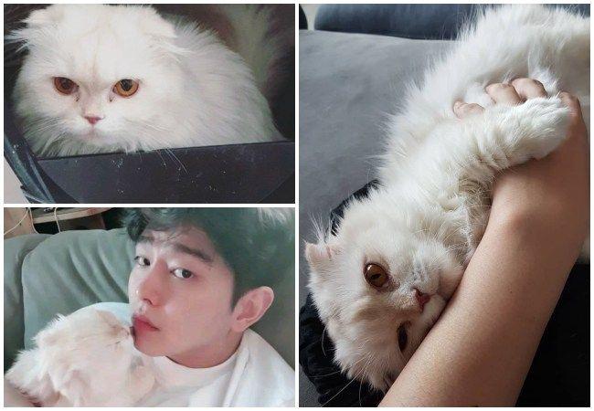 Yoo Kyun Sang y su fallecido gato Somi.