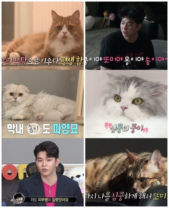 Yoon Kyun Sang y sus cuatro gatos.